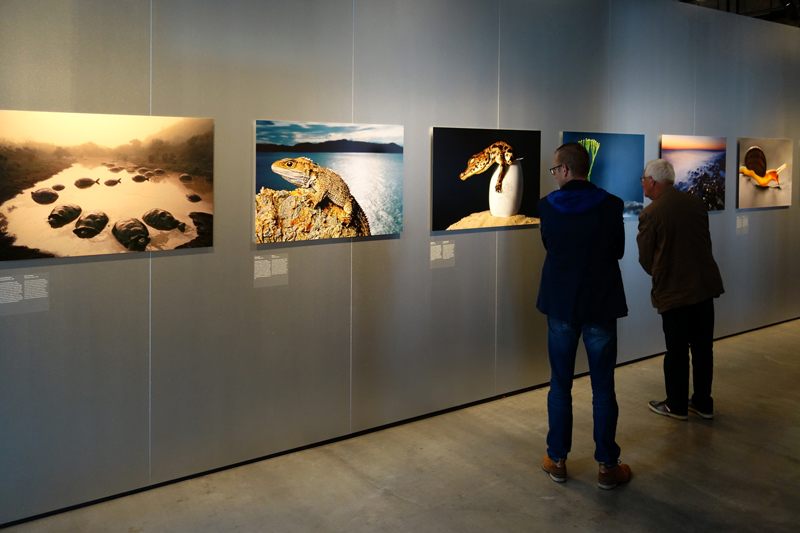 Frans Lanting exhibition Dialogues of Nature